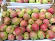фрукты овощи из молдовы самого высокого качества